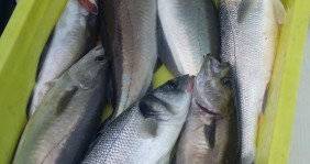 Alquiler de yate Loctudy - Bénéteau Antares 620 Fishing en SamBoat