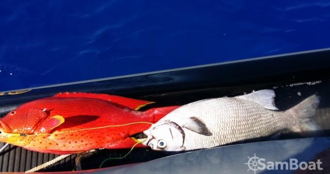 Alquiler de barcos Saint-Gilles les Bains barato de olympic 700