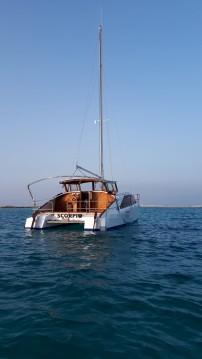 Alquiler Catamarán en La Savina - BOBCAT Bobcat