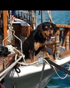 Alquiler de barcos Crikvenica barato de EX-LIFEBOAT